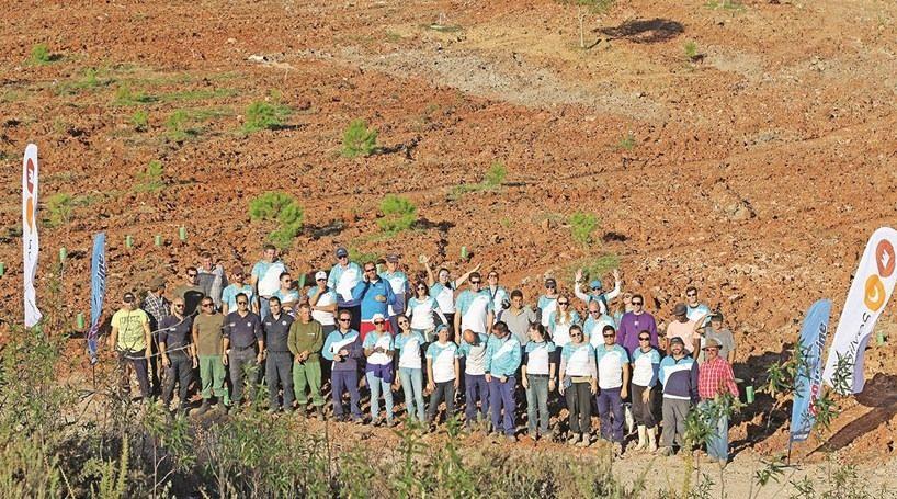 21 mil árvores plantadas em quatro concelhos do Algarve