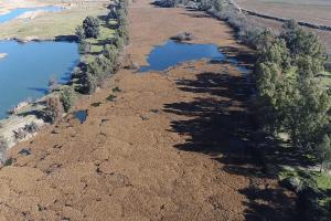 Rio Guadiana coberto de jacinto-de-água