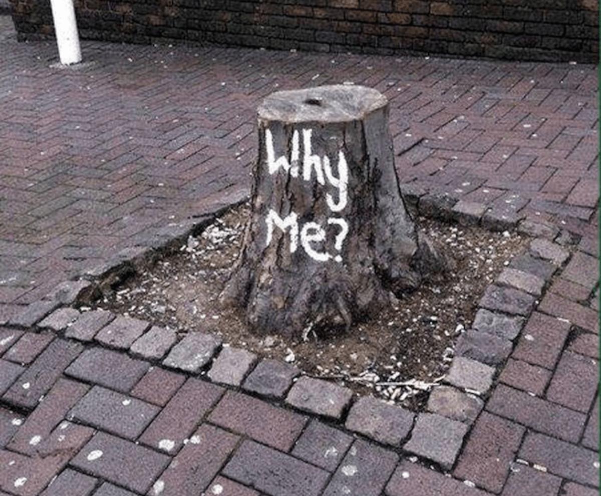 árvore com escrito