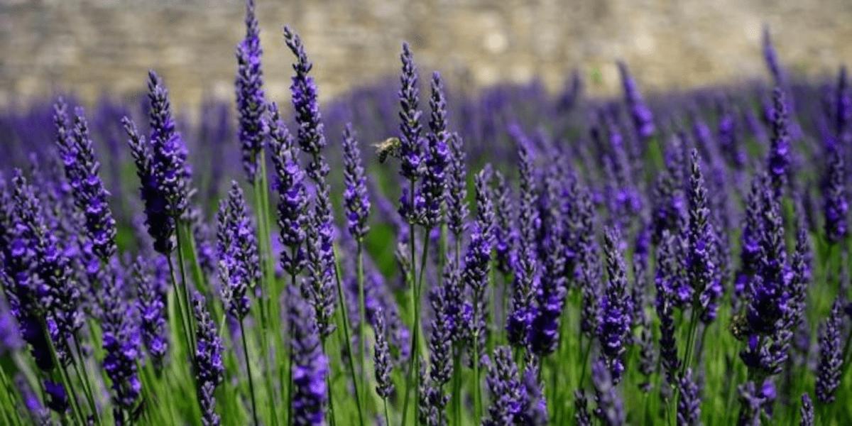 Jardins sustentáveis
